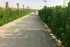 Landscaping-Al-Khazna-Farm