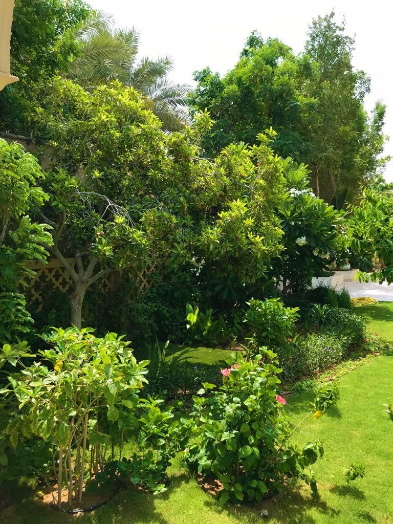Palm Jumeira Villa  garden plants