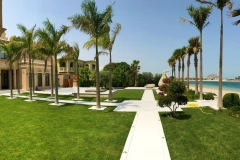 Palm Jumeira Villa Palm trees and walkway