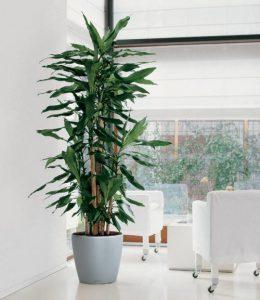 Lechuzapic indoor plants